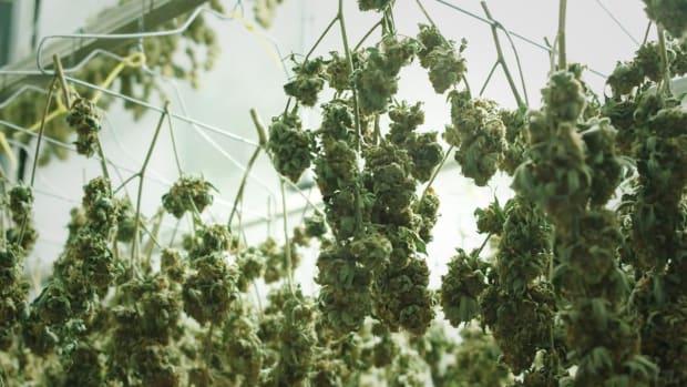 Cronos Sells Stake in Whistler Medical Marijuana to Aurora Cannabis