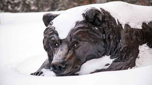 January's Market Climate Forecast: This Bear's Not Hibernating