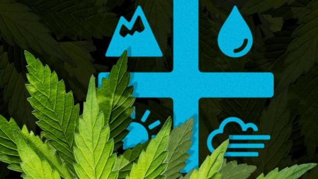 Aurora Cannabis Rises