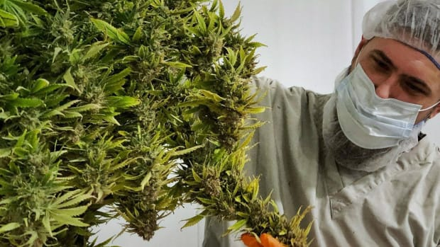 Canopy Growth Posts Better-Than-Expected Revenue