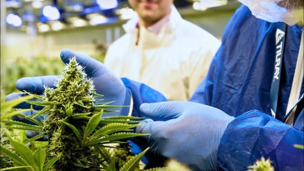 Tilray Jumps After $200 Price Target and Bullish Rating at Benchmark