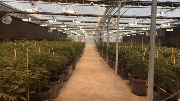 How Sin City Is Back on Track With Adult Use Cannabis Market
