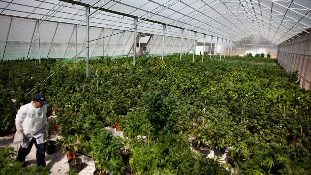 Canopy Growth Likely Merger Partner For Alcaliber