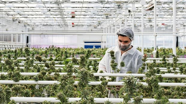 Ask The Expert: Cannabis One CEO Believes Now Is the Time to Invest in Cannabis