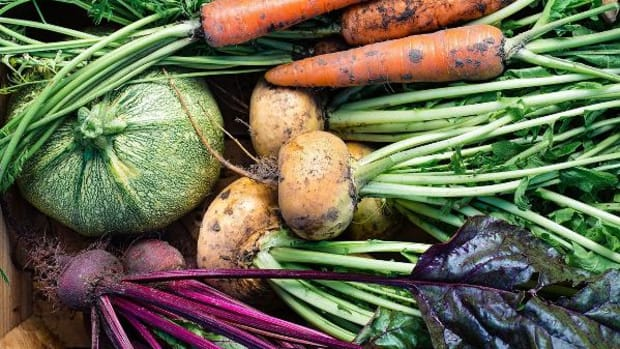 Root and Other Underground Vegetables