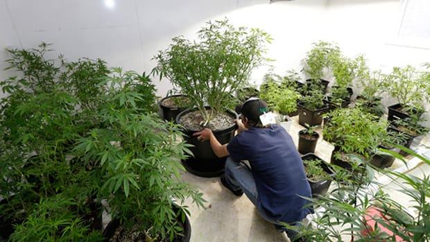 Nevada Medical Marijuana Dispensaries Anticipate Licensing