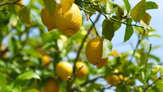 When Your Portfolio Has Lemons, Make Lemonade (or Guacamole)