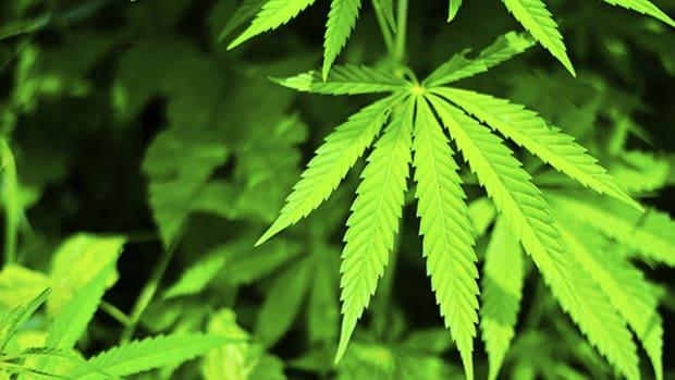 Legalized Marijuana Sales Rock the Rockies