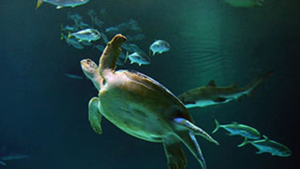 10 Places to See Sea Turtles