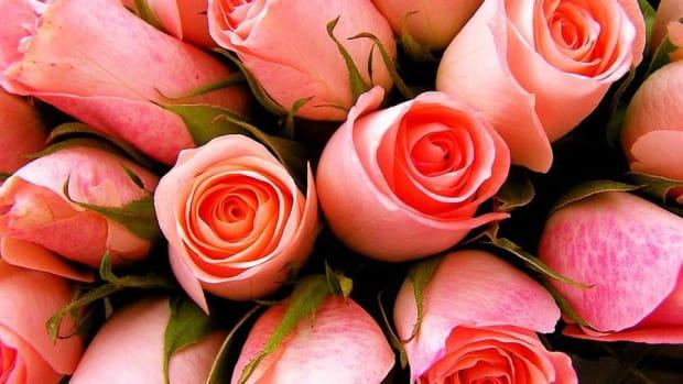 1-800-Flowers.com Seeking Sweet Valentine's Day Sales