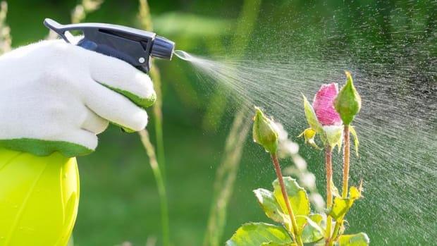 Scotts Miracle Gro CEO on Economy, Bringing Internet to Gardening