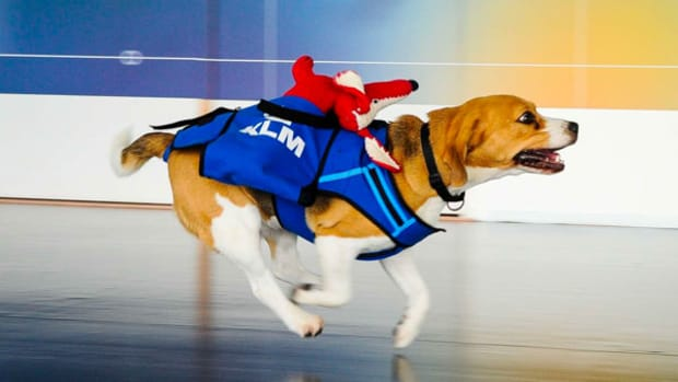Flying With Pets? Here's How Much It'll Cost You