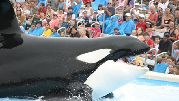 Former SeaWorld Orlando President Prather Helping Feds in 'Blackfish' Probe