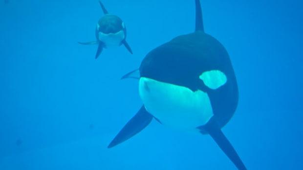 SeaWorld Entertainment Stock Sliding as Macquarie Cuts Rating