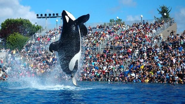 SeaWorld Stock Continues Decline Following 'Blackfish' Statements Subpoena
