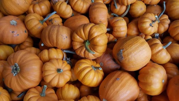 America's Love for Pumpkins by the Numbers: Video