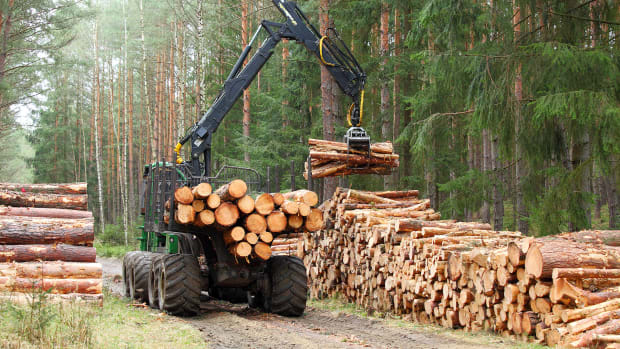 logging forest resources trees lumber sh