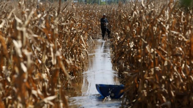 China's Surging Corn Prices Blamed On Speculators As Beijing Plays Down Fears Of Grain Shortage