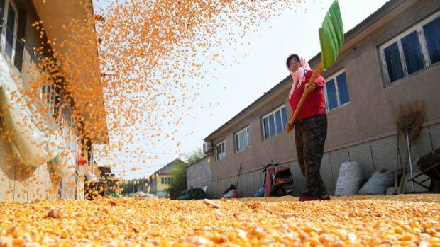 China's Corn Imports Soar In September As Beijing Moves To Counter Skyrocketing Domestic Prices