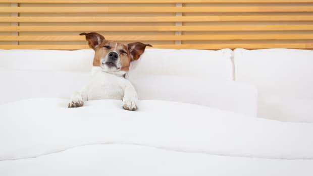 pet hotel dog sh