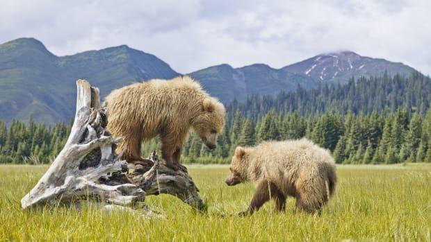 12 denali np alaska bears sh