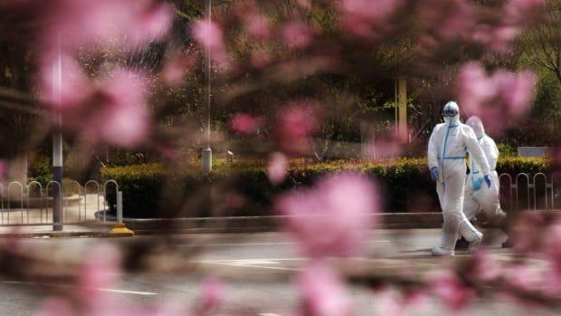 Wuhan Cherry Blossom Live Stream Launched Amid Coronavirus Lockdown