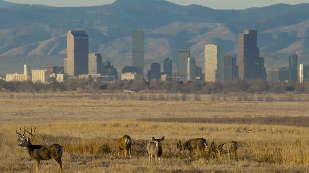 10 Denver sh