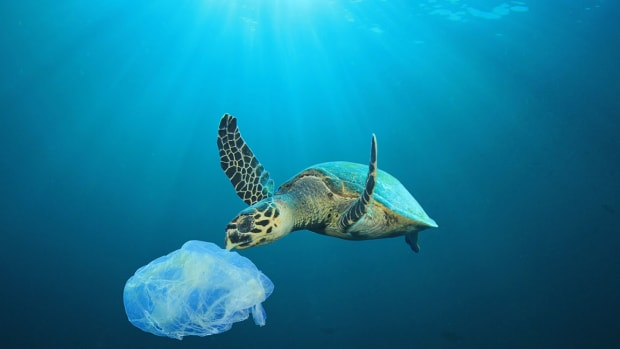 0 turtle By Rich Carey Shutterstock