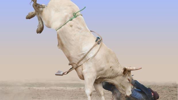 bull falling off sh