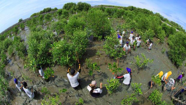 0 earth climate mangrove Sura Nualpradid : Shutterstock.