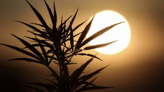 China's CBD Crackdown Deals Blow To Emerging Market Using Cannabis-derivative In Cosmetics