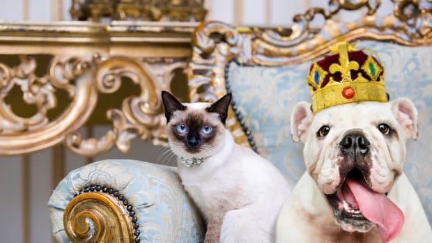 Rich Pets Lead