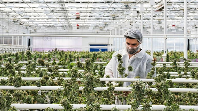CannTrust Slides After Auditor KPMG Withdraws Financial Report