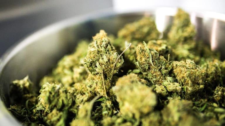 Aurora Cannabis Up 2.4%; Tera Tech Off 5.6%: Cannabis Stocks Mixed