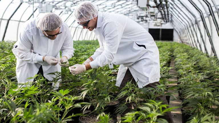 Aurora Cannabis Up 3.6%, General Cannabis Off 2.9%; cbdMD Due to Report