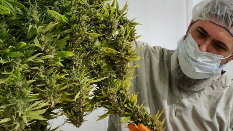 Are New Lows in Store for Canopy Growth on Earnings Miss?