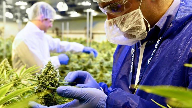 Ladenburg Analysts Spark Coverage of Cannabis Stocks Canopy, Aurora and Tilray