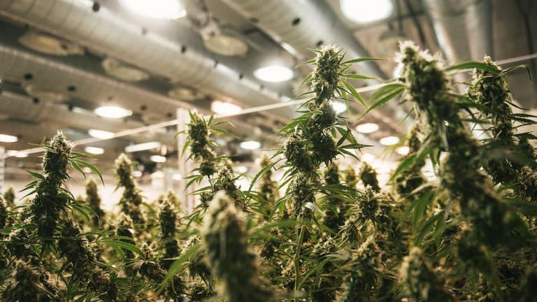 Canopy Growth Gets Shareholder OK for Acreage Deal, Rises Ahead of Earnings