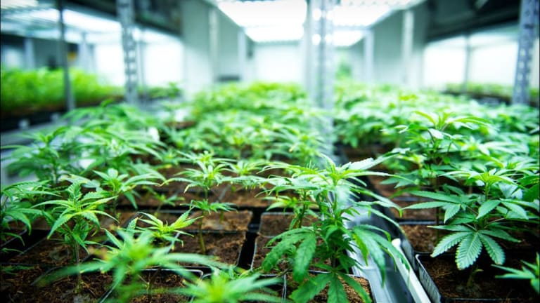 Here's What I Think About Jumping on Tilray's Wild Ride