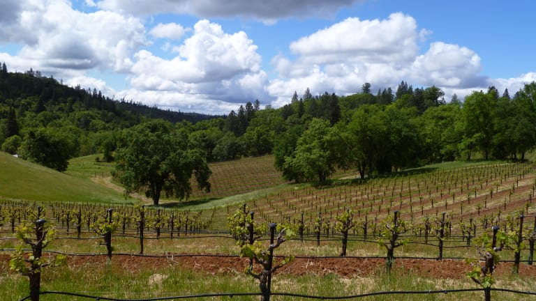 One California Vineyard, Two Spanish Grapes, Four Distinct Wines