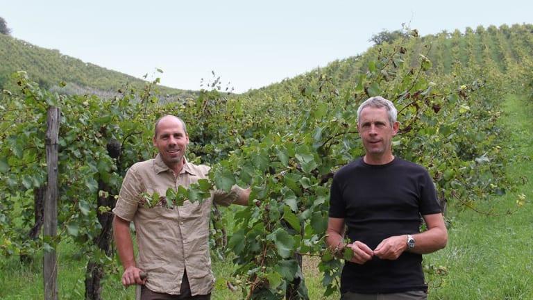 The Smoky, Savory Sauvignon Blancs of Styria's Steep Hills