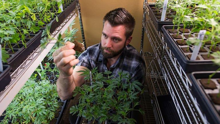 Marijuana Brands Push Past Bans to Go National