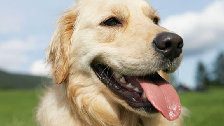 Brazil's Pet Market Shows its Teeth