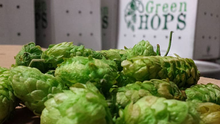 What 'Wet Hop' Beers Are and Why You Should Try Them Right Now