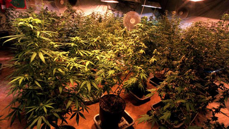Terra Tech Wins 8 Provisional Marijuana Licenses in Nevada Despite Detractors and Twitter Harassment