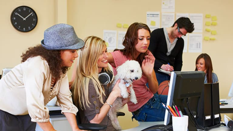 How to Handle Pets at the Office