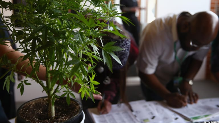 Marijuana Companies Are Getting a Makeover: The Evolution of the Blooming Industry