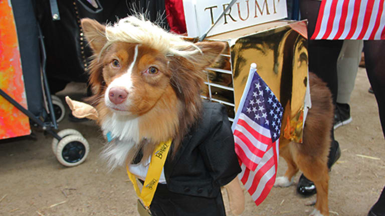 17 Adorable Dog Costumes, From Donald Trump to the Real Dracula