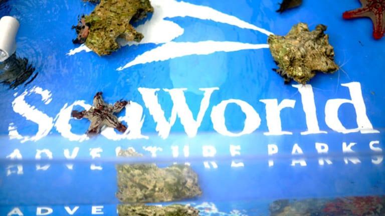 California Legislation Aimed at SeaWorld