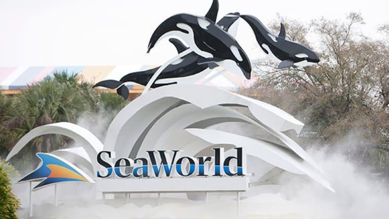 SeaWorld Wades Into 2014 Amid 'Blackfish' Backlash